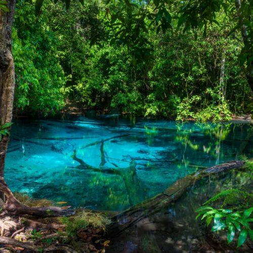 5億年の歴史?ミドリムシの生態や生息地に迫る