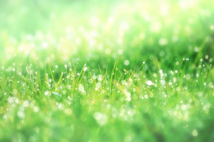 放射線をエネルギー源として繁殖をする菌も確認されている