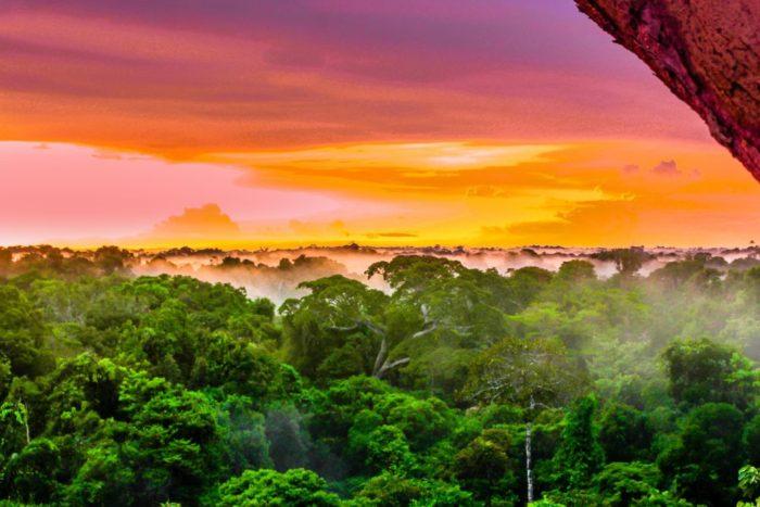 二酸化炭素吸収率はアマゾンの熱帯雨林以上!?地球温暖化対策としてのミドリムシ